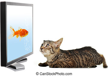 Cat looking at fish on display