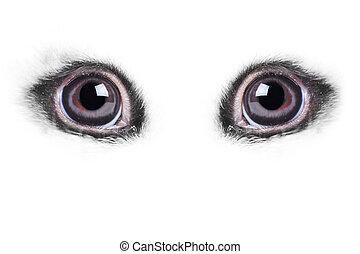 rabbits eye very close up