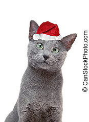cat with santas hat isolated on white