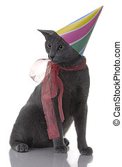 cat with birday hat and ribbon isolated on white