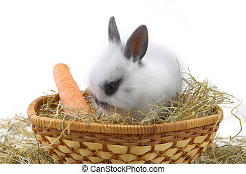 small rabbit isolated on white background
