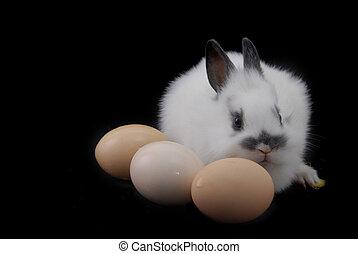 pequeño, huevos, conejo