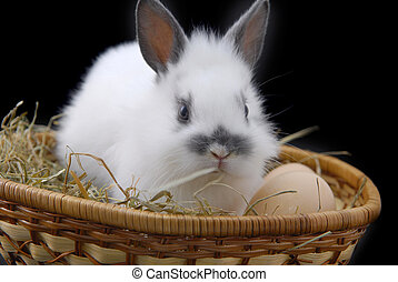 small rabbit and eggs in basket - small rabbit and eggs...