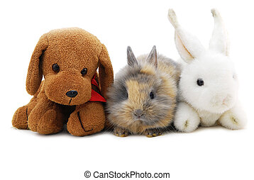 small rabbit and toys isolated on white background