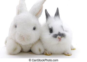 pequeño, conejo, juguetes