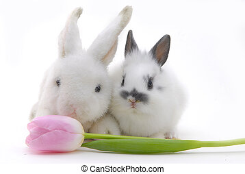 small rabbit and toy with flower - small rabbit and toys...