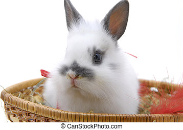 small rabbit in basket - small rabbit isolated on white...
