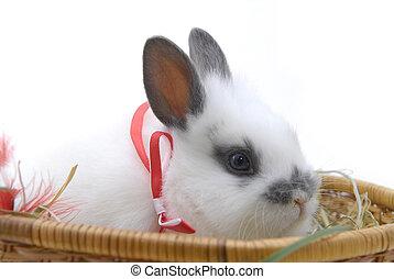 pequeño, cesta, conejo