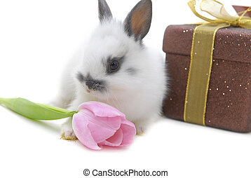 small rabbit with flower and present on white background