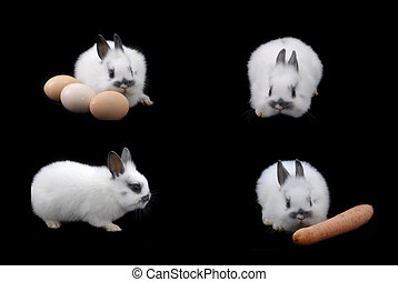 small rabbit and eggs isolated on black background