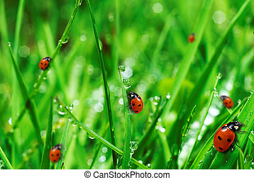 friss, zöld, fű, Víz, savanyúcukorka