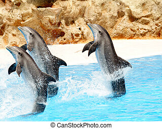 Three Bottlenose Dolphins performing tail stands