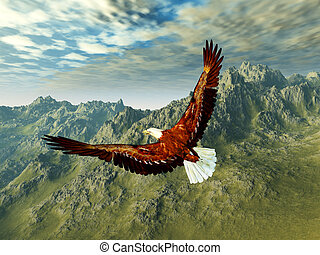 eagle in the mountains - fly over the mountains