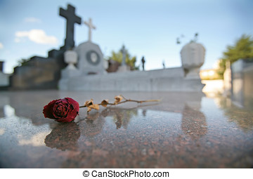 Single Dried Rose on Tomb in Graveyard - A poignant single...