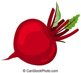Red beet Isolated on white background Vector illustration