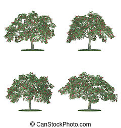 erythrina trees collection isolated on white