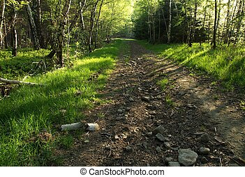 The track in mountains in spring
