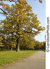 oak with yellow leaves under blue sky
