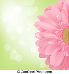 Gerbera - Pink Gerbera, Isolated On White Background, Vector...