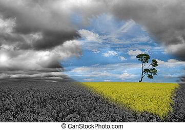 single tree in the field - single tree on the yellow field