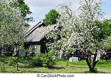Flowering tree with farm house