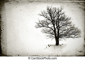 lone tree without leaves