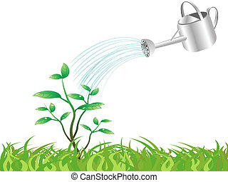watering the young tree