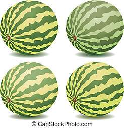 vector collection of watermelons