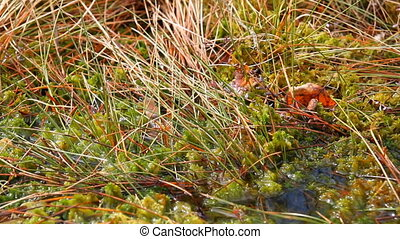 moss in the swamp, close-up