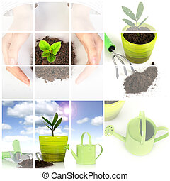 Plant with garden tools isolated over white. - Collage....
