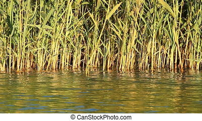 Waving reeds and water