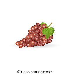 grapes with leaf - illustration of grapes with leaf on white...