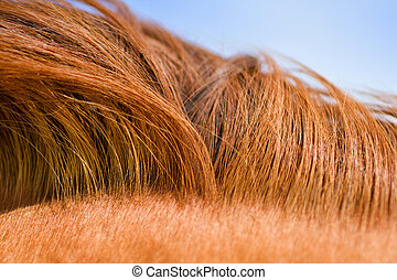 horse mane texture - Red mane of a horse. Natural drawing