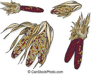 Indian Corn - Vector art in Illustrator 8. Kernels are...
