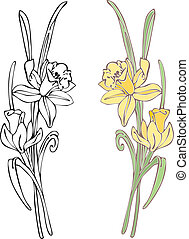 Daffodils - Hand-drawn in loose style with soft colors....