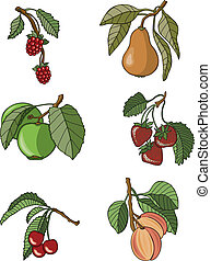 Fruit Assortment - Vector art in Illustrator 8 Six delicious...