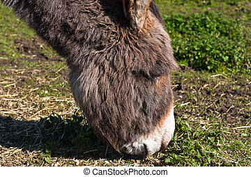 Donkey grazing in field with grass