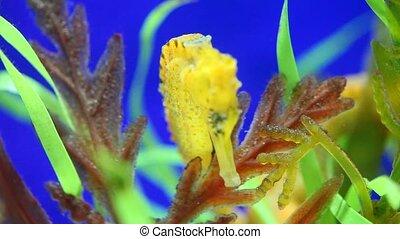 Closeup of a seahorse