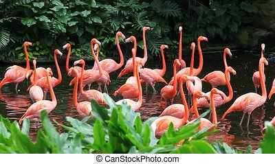 Flamingo lake - Flamingos in the lake