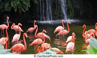 Flamingo lake with waterfall