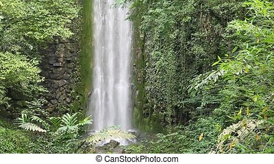 Powerful waterfall  - waterfall in the rain forest