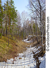 Siberian forest - Siberian pine conifer forest in ravine at...