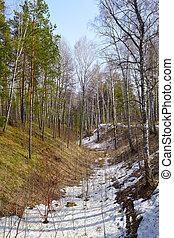 siberiano, bosque
