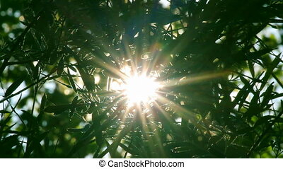 bright sun shines through foliage