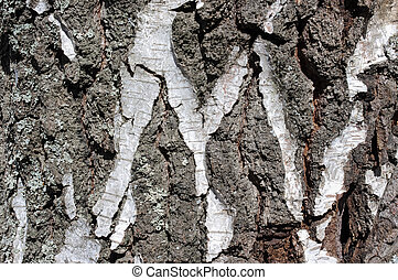 Old birch bark with letter M as background or logotype