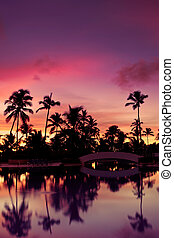 Blue pink and red sunset over sea beach with palms Dominican...