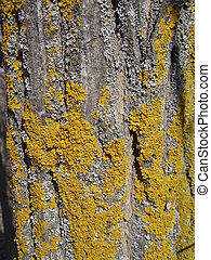 Tree lichen - Background
