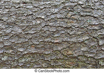trees bark - close-up of an pine trees bark