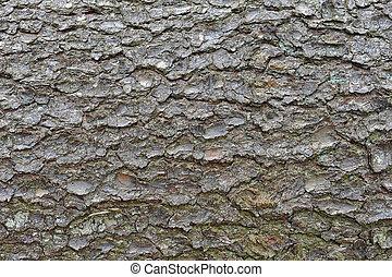 tree's bark - close-up of an pine tree's bark