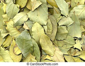 Laurel Leaf Texture - Close-up of green dry laurel leaves....